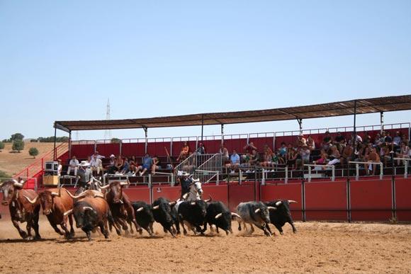 Toros y caballos de Domecq
