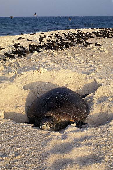 En la playa con las tortugas