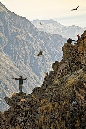 Sigue el vuelo del cóndor en el valle del Colca