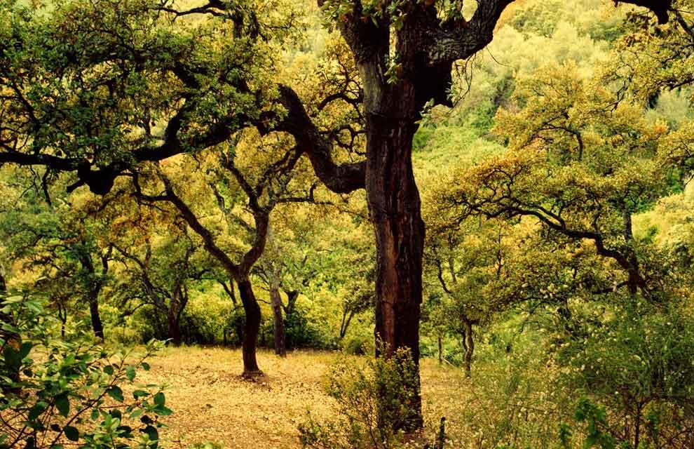 Resultado de imagen de otoño en  la sierra de huelva