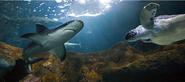 Una noche entre tiburones