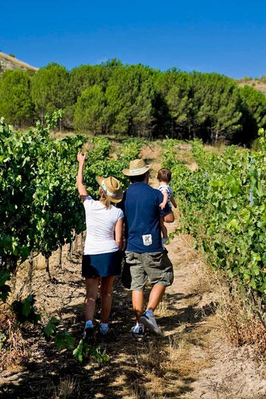 Vive la vendimia en la Ribera del Duero