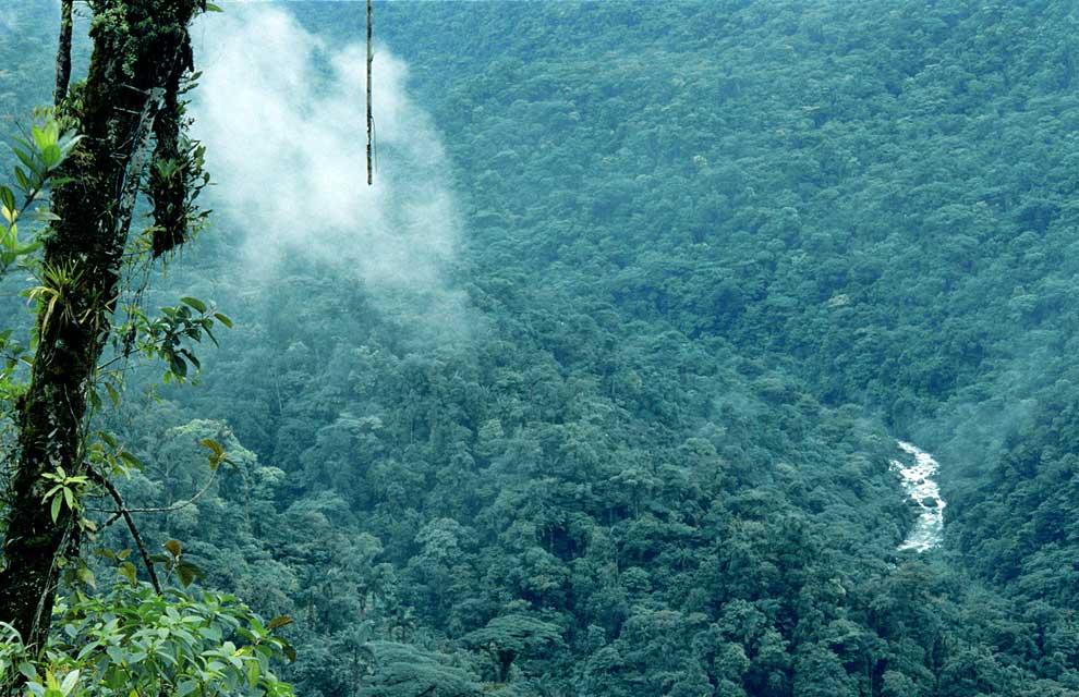 Costa Rica, piensa en verde