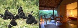 El último refugio de los gorilas