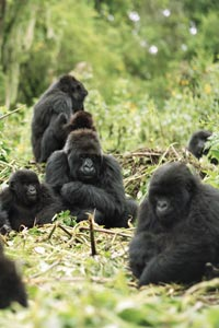 Resultado de imagen de refugio gorilas