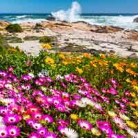 Costa Oeste de Sudáfrica, en clave floral