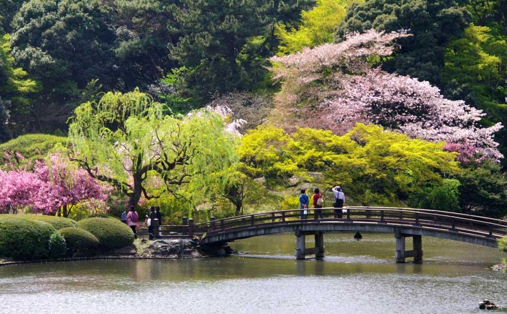 As lucen cada primavera los cerezos en flor en tokyo for Jardines de primavera
