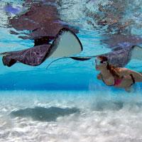 Una zambullida en el paraíso submarino de las islas Cayman