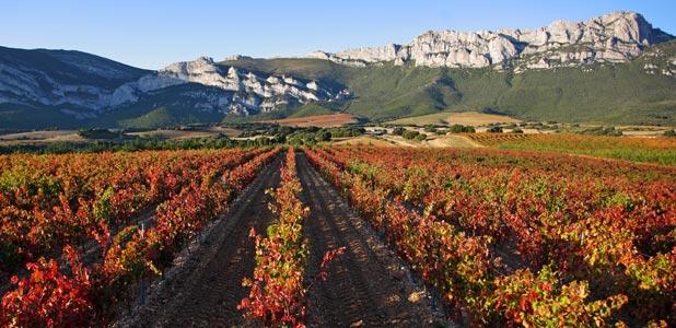 Un viaje por los mejores paisajes del vino del mundo