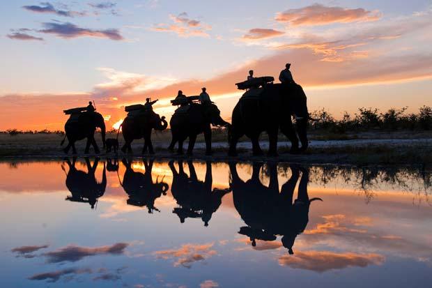 Por la sabana de Botswana a lomos de un elefante