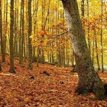 El Castañar de El Tiemblo, el mejor bosque de otoño