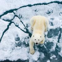 Aventura entre hielo y osos polares en las islas Svalbard