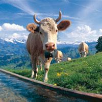 ¿Quieres ganar un viaje a la región suiza de Friburgo?