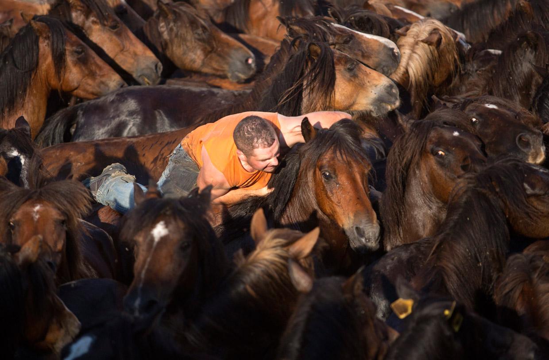 Rapa das Bestas, una fiesta gallega de raigambre para este fin de semana