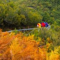 Estrenamos el otoño en el bosque encantado de Muniellos