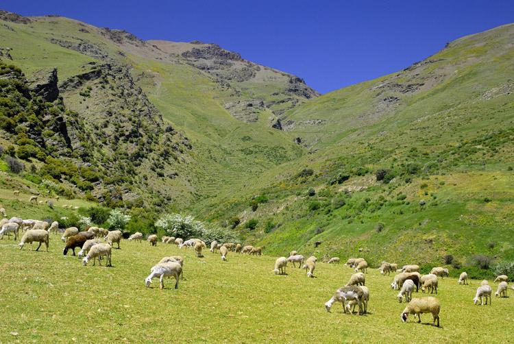 Una ruta en coche de pueblo en pueblo por la Alpujarra