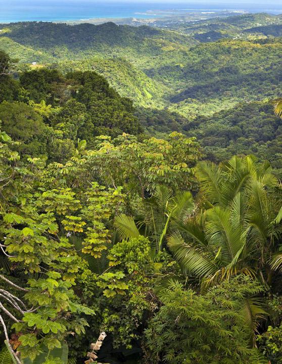 El bosque lluvioso donde se baña Ricky Martin