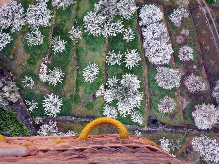 De los cerezos en flor a los Empalaos de La Vera, cuatro planes de lo más variopinto para Semana Santa