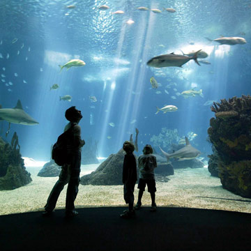 El mejor acuario del mundo está en Lisboa