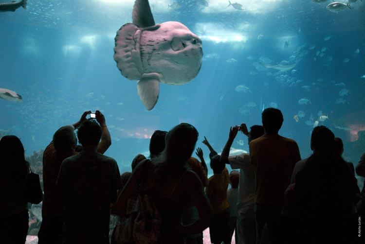 El mejor acuario del mundo est en lisboa - El mejor colchon del mundo ...