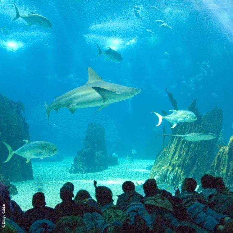 acuario-lisboa