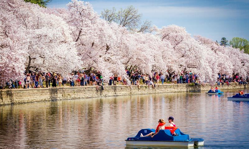 Descubriendo Washington D.C en primavera, los imprescindibles en la capital de Estados Unidos