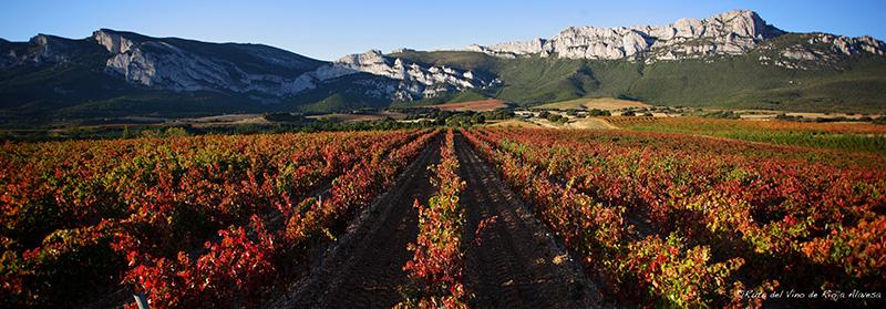 Paisaje-Rioja-Alavesa