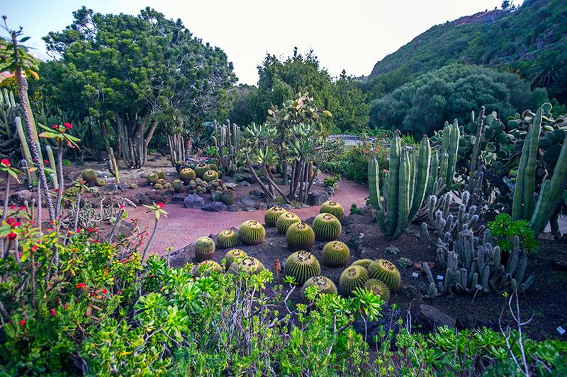 Las palmas de gran canaria una ciudad que da que hablar for Jardin botanico viera y clavijo