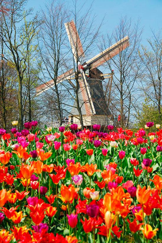 Keukenhof el jard n m s colorido de europa en primavera foto 4 - Jardines de tulipanes en holanda ...