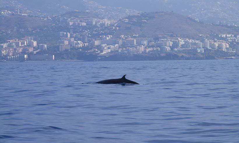 ¡Ballena a la vista!, diez lugares magníficos para ver cetáceos