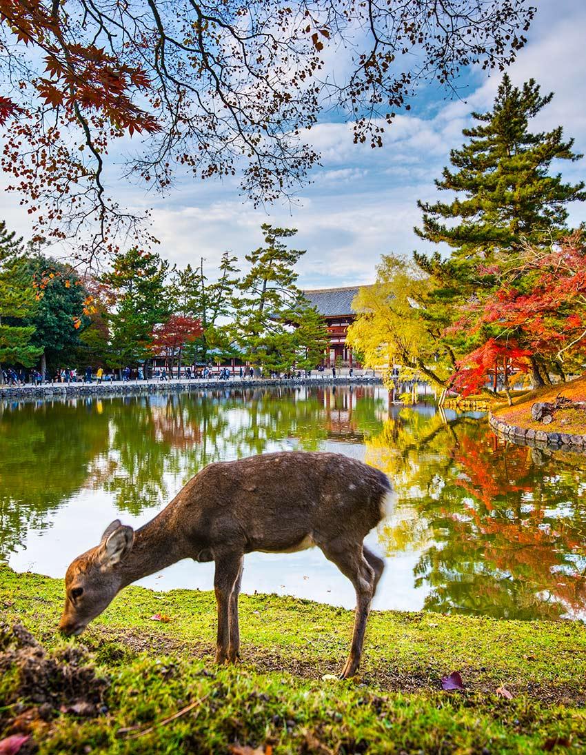 Nara, Japón