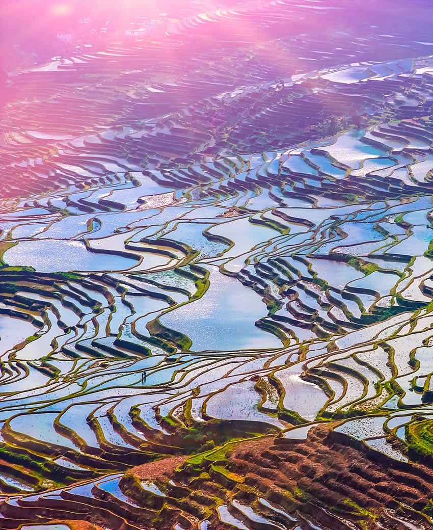 El Paisaje De Arrozales De China Que Parece Un Cuadro