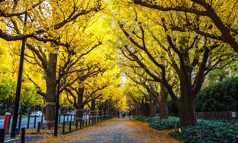¡Y llegó el otoño! Los mejores lugares de Japón para disfrutar de la explosión de color