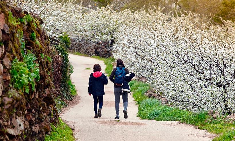 Guía práctica para disfrutar al máximo de la floración del Valle del Jerte