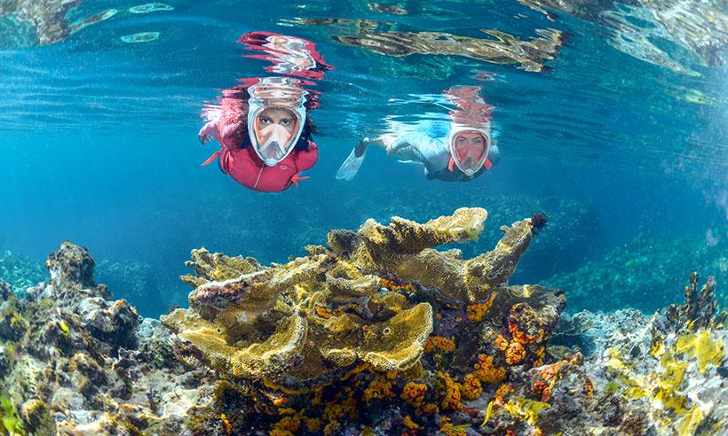 ¿Sabías que solo conocemos un 5% de todo lo que esconde el mar?