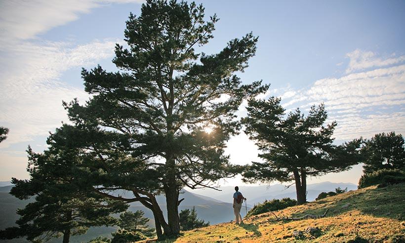 Los hayedos de la sierra Cebollera, espectaculares para este otoño