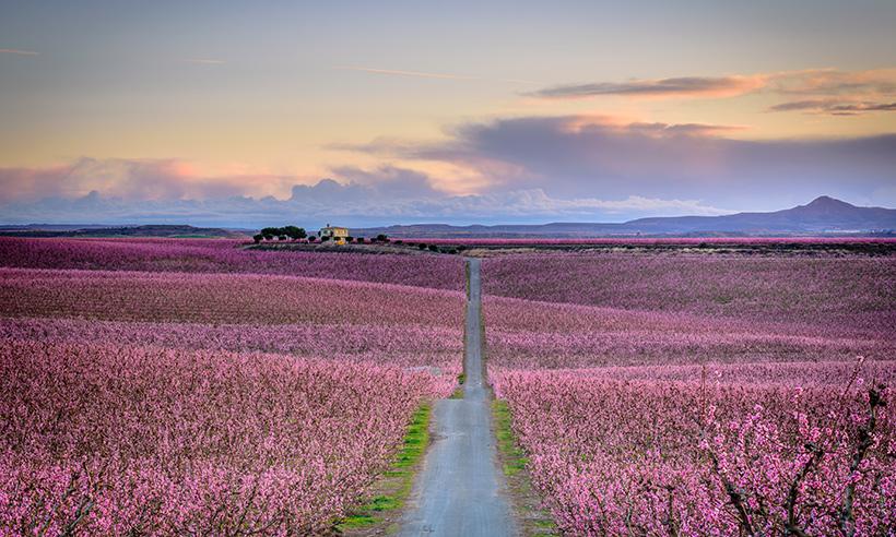 El mar de color rosa de Aitona, el mejor anuncio de la primavera