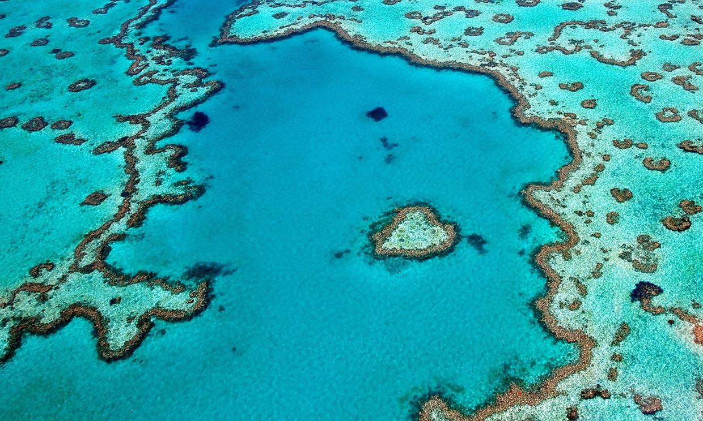 Gran Barrera de Coral, el mayor ecosistema vivo del mundo