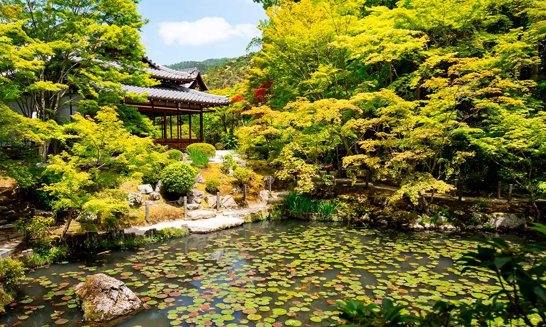 Un paseo relajado por los jardines de Kioto, el corazón verde de Japón