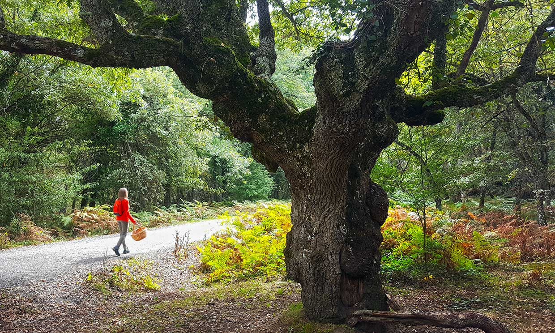 Cinco bosques a rebosar de setas, déjate guiar