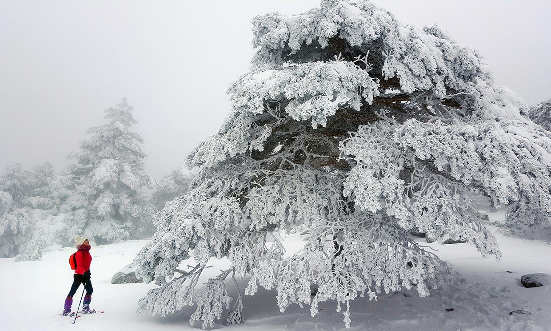 Excursión por la sierra de Guadarrama con raquetas de nieve