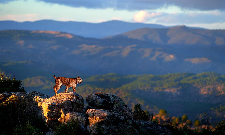 Los mejores lugares de España para avistar fauna ibérica