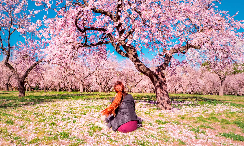 Los mejores lugares para ver los almendros en flor en España