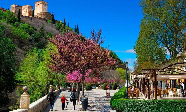 Cómo comerse Granada en 8 paradas gastro
