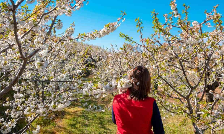 Fundão, el Jerte portugués que estalla en flor en primavera