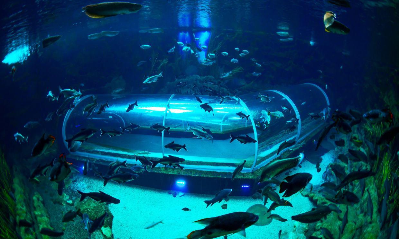 Experiencias submarinas en los acuarios más espectaculares de España