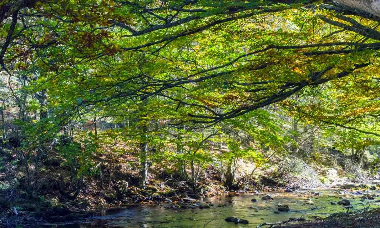 Cómo visitar el hayedo de Montejo, un bosque para rematar la primavera