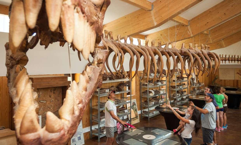 La ruta de los dinosaurios por La Rioja empieza en Enciso