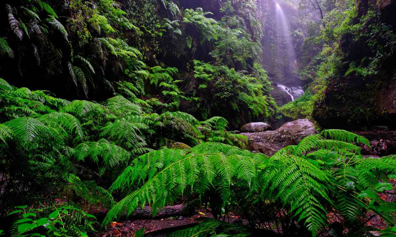 El bosque de los Tilos, un mundo prehistórico cerca de las estrellas