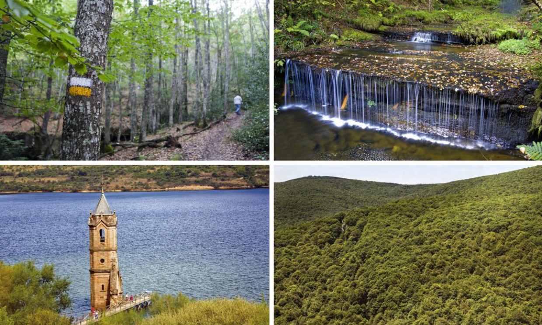El monte Hijedo, un precioso robledal para senderistas entre Cantabria y Burgos